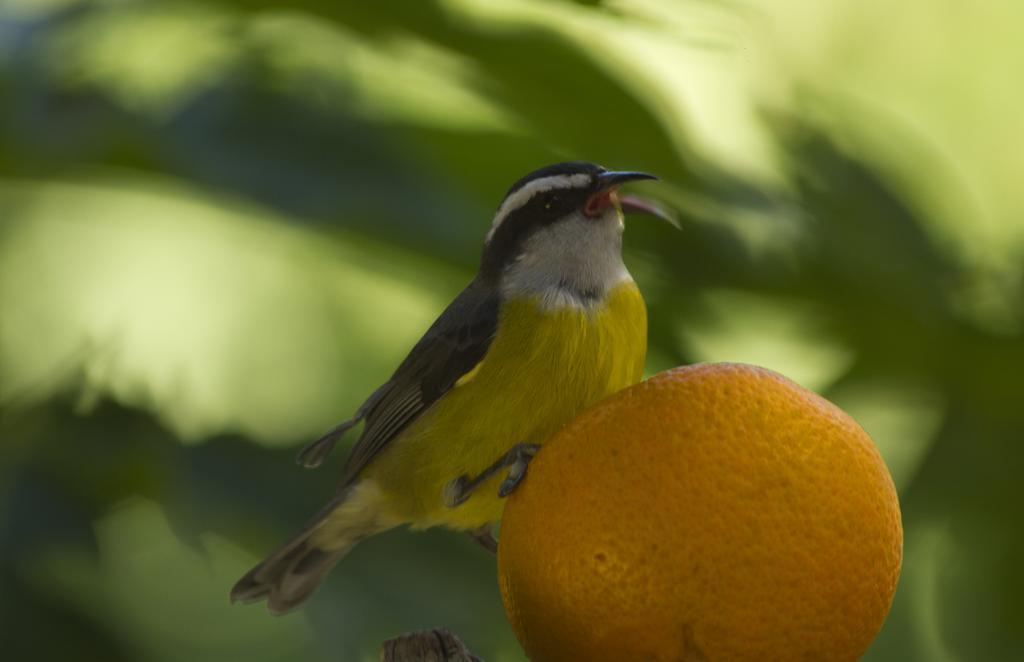 bosque-dos-beija-flores-10